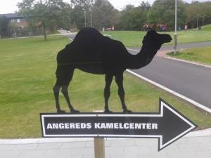 Än finns det inga kameler i kamelparken, men en anslående skylt.